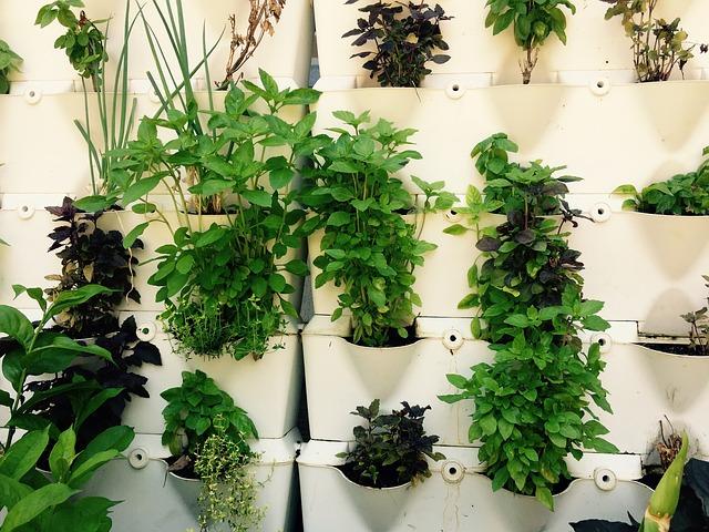 bylinková stěna