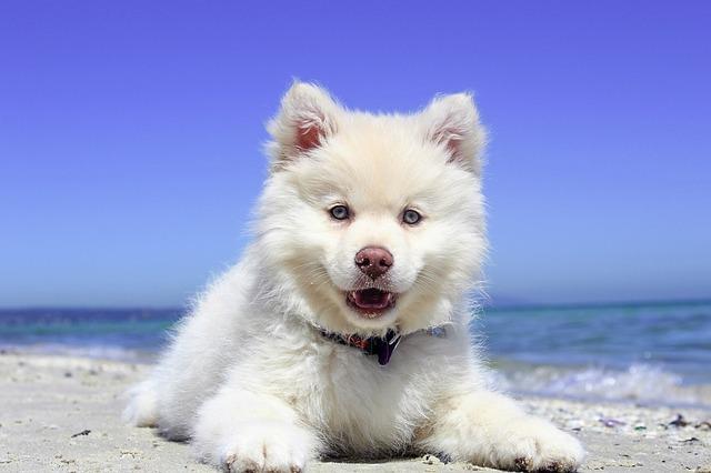 štěně na pláži