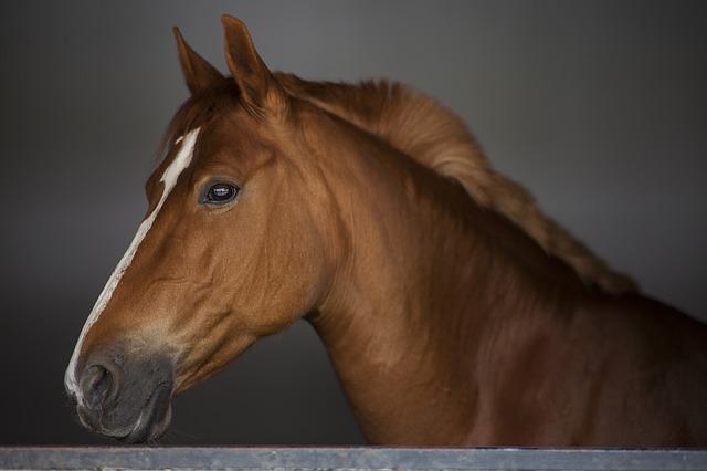 hlava koně.jpg